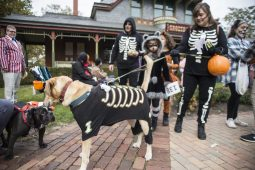 The Kerry family wears matching costumes including their dog, Bear, during the annual Monsters on Mainstreet trick-or-treating event on Oct. 27.   ALEXA ROGALS/Staff Photographer