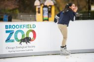 Students on a field trip from Mariano Azuela Elementary School use rental skates to try out the new ice skating rink on Nov. 1, at Brookfield Zoo. | ALEXA ROGALS/Staff Photographer