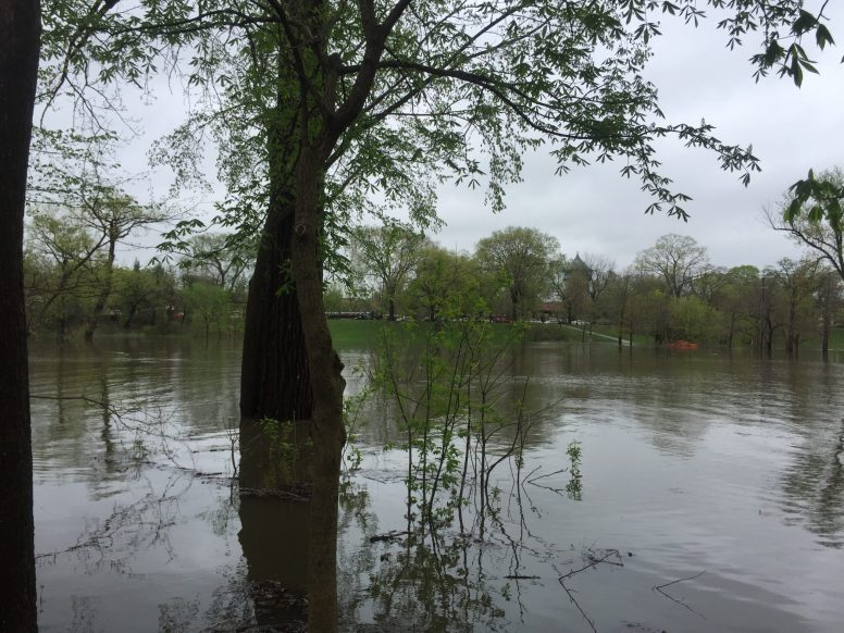 Swan Pond Park in Riverside has been inundated by the Des Plaines River, which reached moderate flood stage by late morning on May 1.