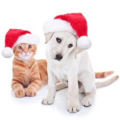 Shop for baked goods, holiday items, donate through the giving tree, try your luck at the online raffle and purchase apparel to support homeless pets during the Animal Care League's Holiday Bazaar.