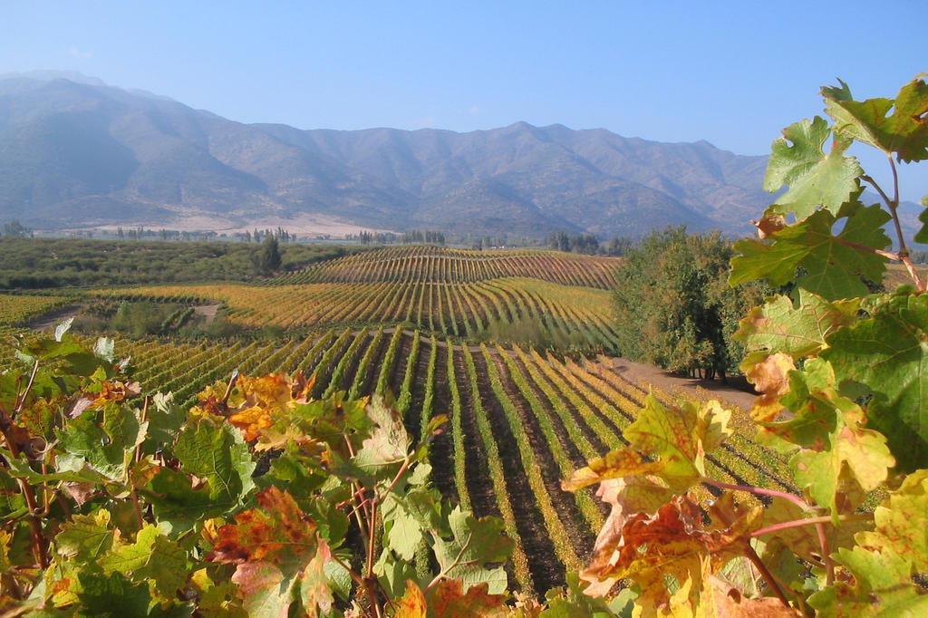 Sete vinícolas para visitar no Chile   GaúchaZH