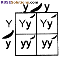 RBSE Solutions for Class 10 Science Chapter 3 Genetics