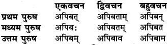 RBSE Class 6 Sanskrit व्याकरण धातु-रूपम् 17