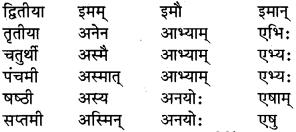 RBSE Class 6 Sanskrit व्याकरण शब्द-रूप प्रकरणम् 29