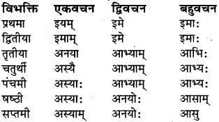 RBSE Class 6 Sanskrit व्याकरण शब्द-रूप प्रकरणम् 30