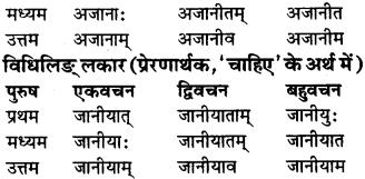 RBSE Class 9 Sanskrit व्याकरण रूप-प्रकरणम् 63