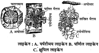 RBSE Solutions for Class 11 Biology Chapter 4