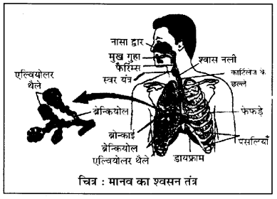 RBSE Class 10 Science Board Paper 2018 image 15