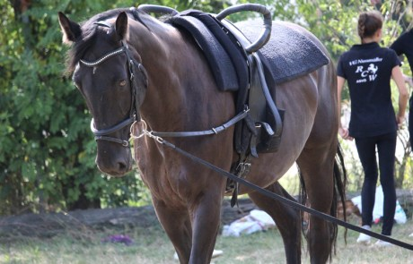 """Voltigierpferd Vigaro """"Vigo"""""""