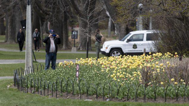 شخص يصوّر زهور التوليب في إحدى ساحات أوتاوا التي اقفلت حدائقها العامّة أمام الجمهور بسبب جائحة كوفيد-19/Adrian Wyld/CP