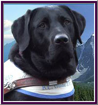 Photograph of dog from the BC Guide Dog Services & Autism Support Dog Services