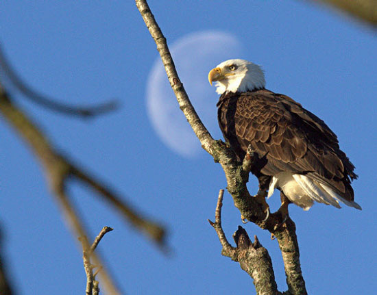 Mooning The Eagle.(Source of photo - Harold Feiertag's photo gallery)