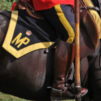 Photograph of RCMP Musical Ride horse & rider
