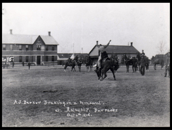 "Photograph Corporal Arthur Barker breaking a horse at RNWMP ""Depot"" in Regina (Source of photo - Ric Hall's Photo Collection)."
