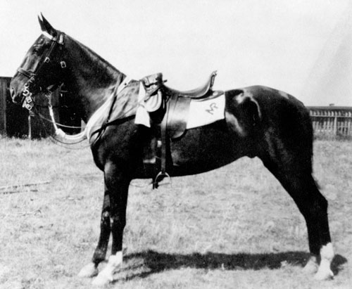 Photograph of a RCMP horse with a white shamrock (Source of photo - Ric Hall's Photo Collection).