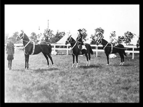 Photograph of Sergeant Major Tim Griffin, on the left, training horses.  Note the blanket on the centre horse. (Source of photo - Ric Hall's Photo Collection)>