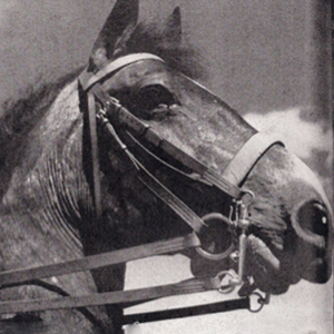 Billy - the famous RCMP horse (Source of photo - Ric Hall's Photo Collection).