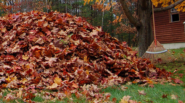 How Clean Leaves Mulch