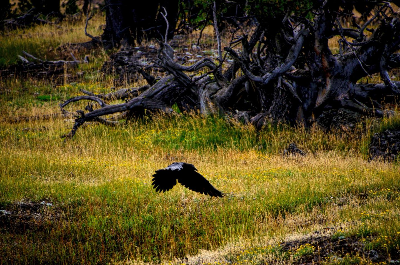 Yellowstone_790-DSC_1122_08-14-2015_093923