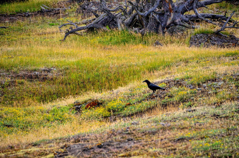 Yellowstone_790-DSC_1131_08-14-2015_093959