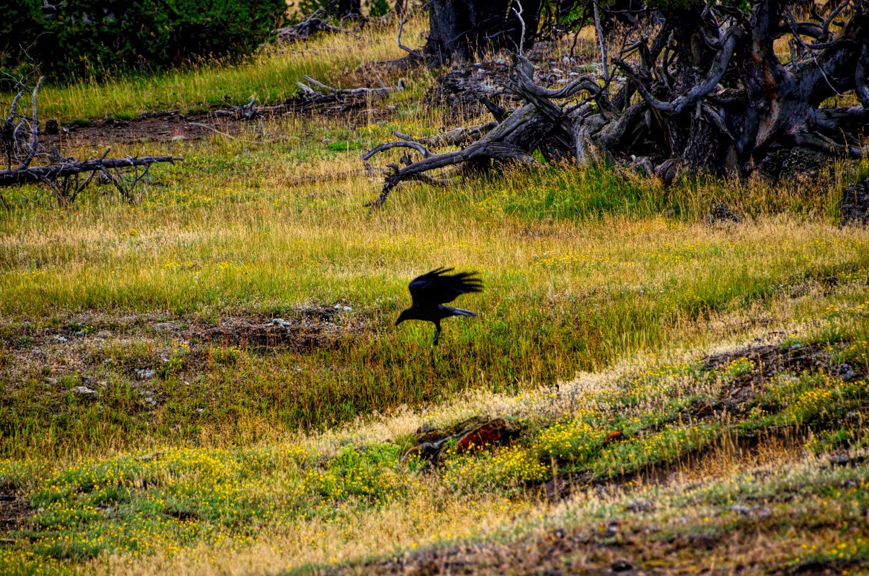 Yellowstone_790-DSC_1134_08-14-2015_094000