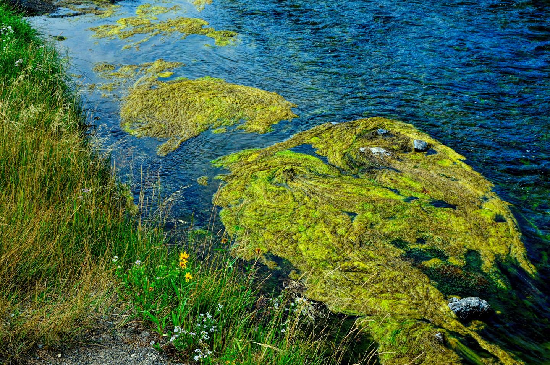 Yellowstone_791-DSC_1224_08-14-2015_104409