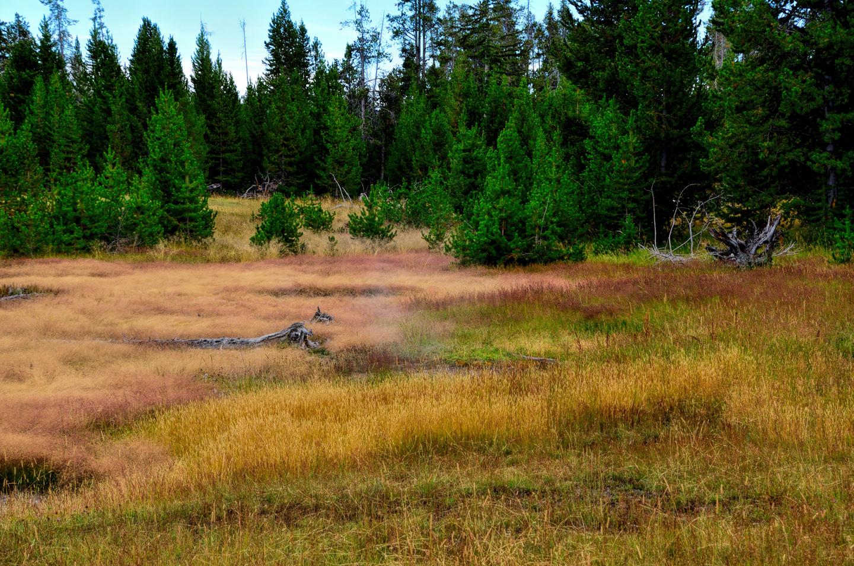 Yellowstone_797-DSC_1649_08-14-2015_160031