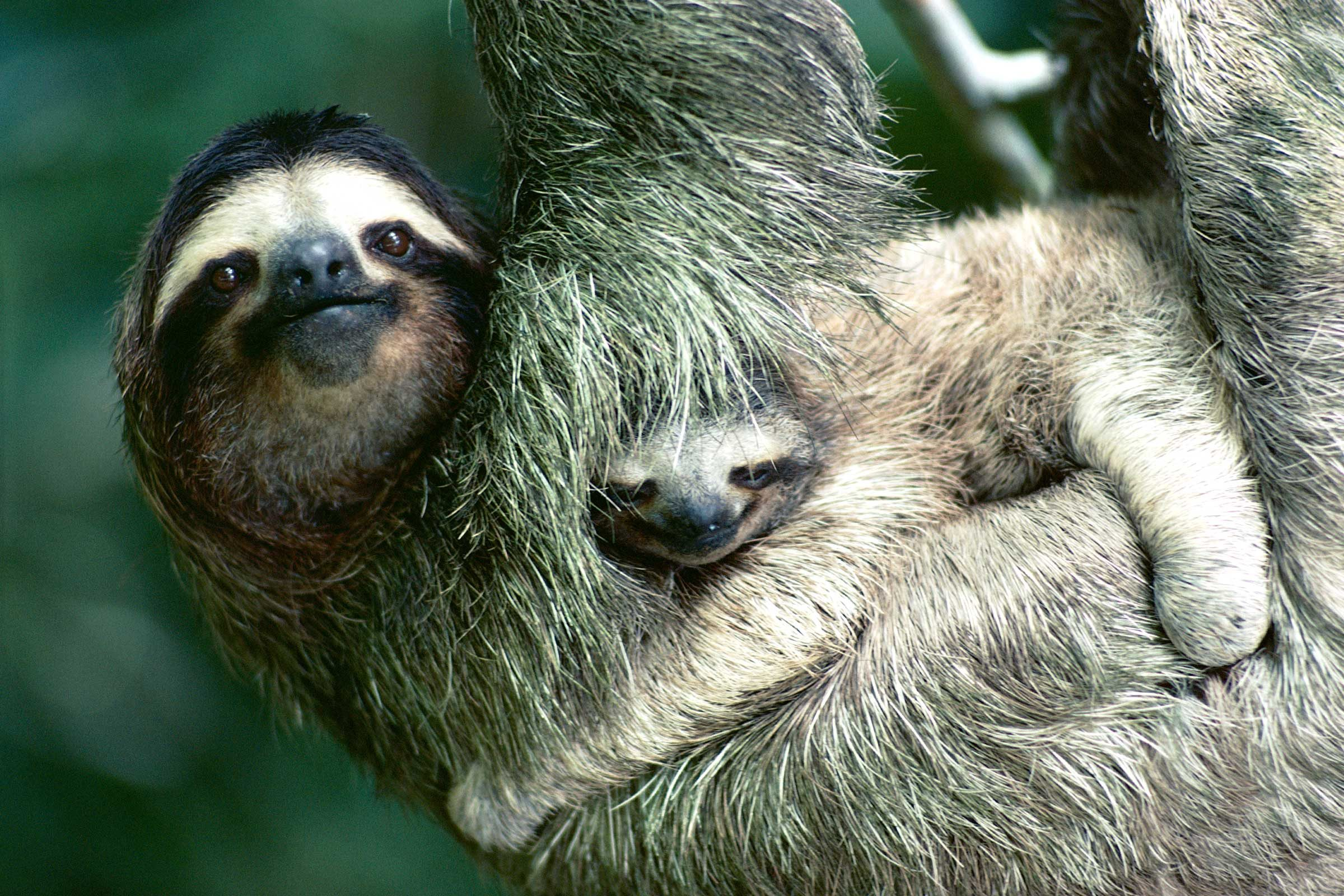National Geographic Photos Of Baby Animals And Their Moms