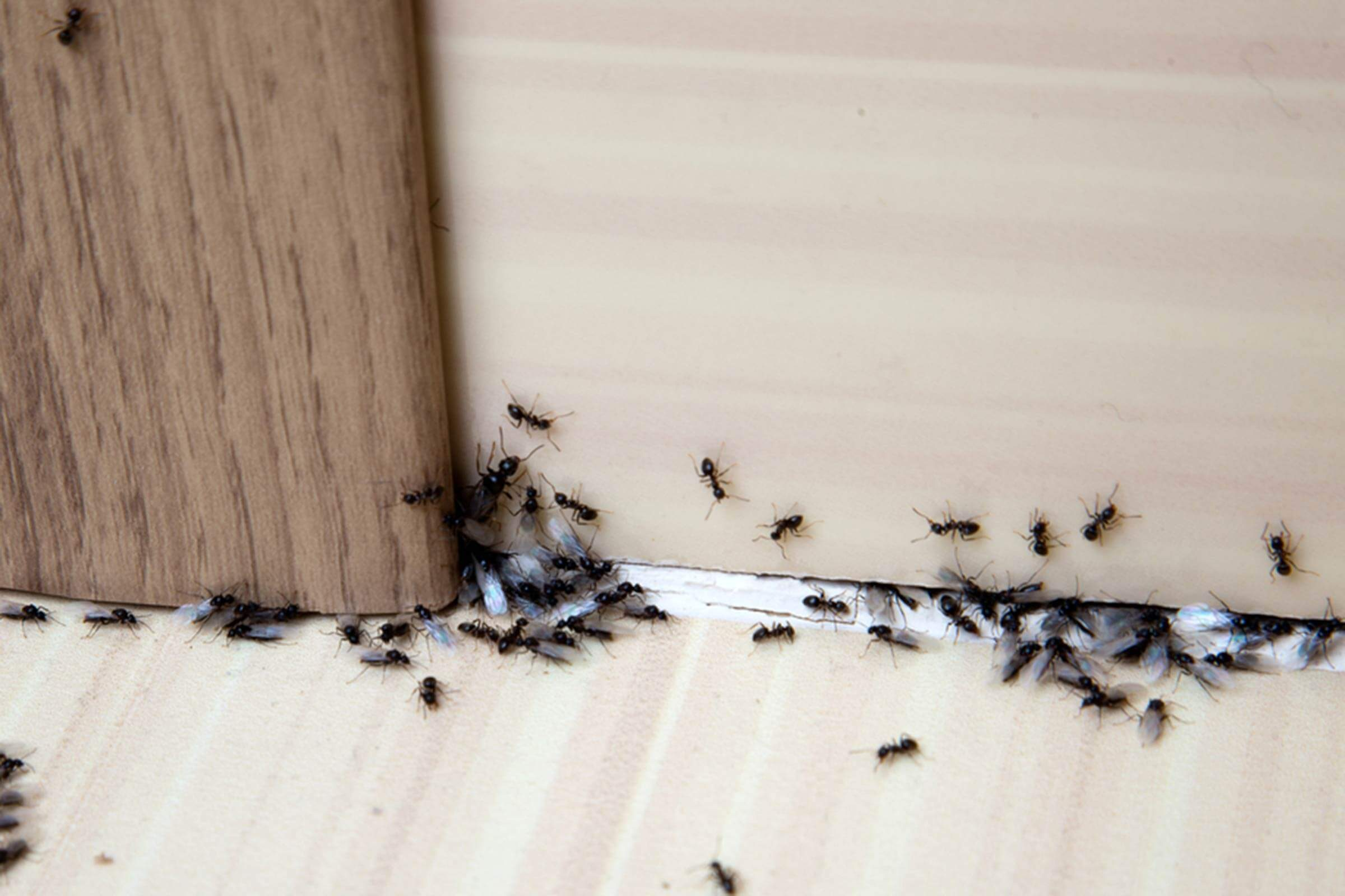 How To Get Rid Of Ants 13 Simple Solutions