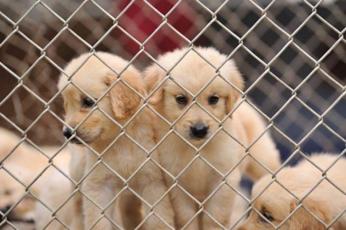 cão solitário na gaiola