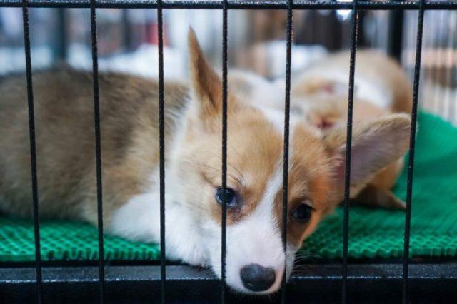 Filhote de cachorro No mercado de animais de estimação Procure que o comprador o traga.