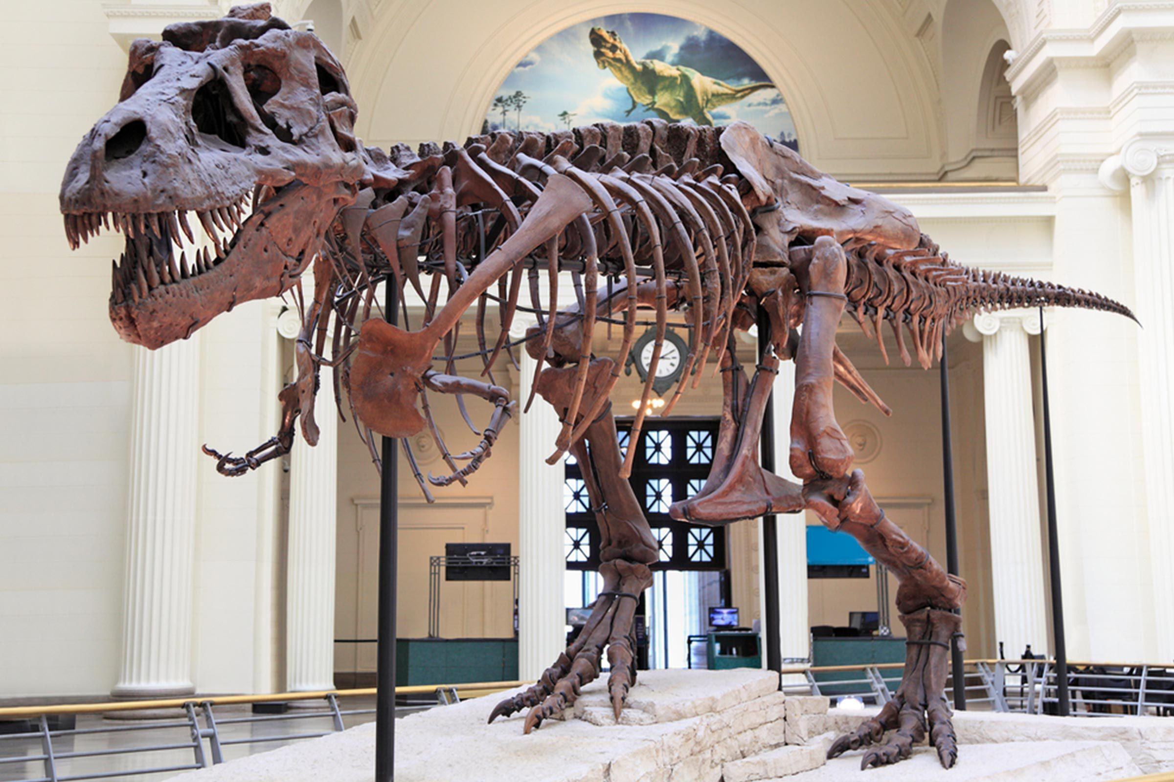 Extinct Animals That Could Be Resurrected One Day