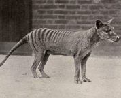 animals that have died out for the reader in the past 100 years