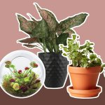 12 Indoor Plants Perfect For Small Spaces Reader S Digest