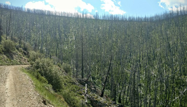A burnt-out area next to a forest service road in a difficult mountain pass.
