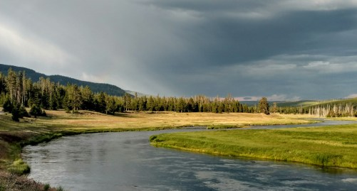 The Madison River, teeming with life due to its warm geyser-sourced waters.