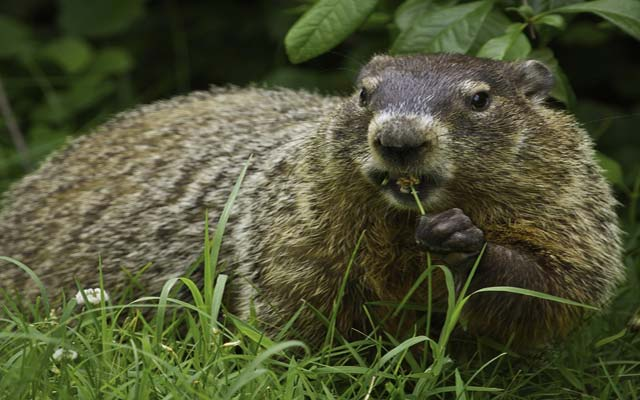 Groundhog Day Quotes 5