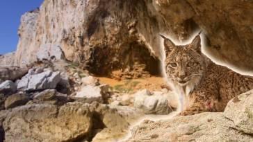 Prehistoric-Gibraltar-Natalie-Wilson-PhD-Reach-Alcance