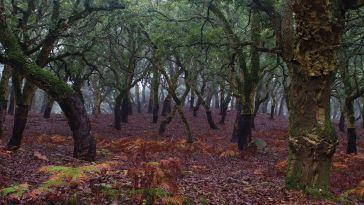 Bosque de la niebla Los Alcornocales Parque Natural