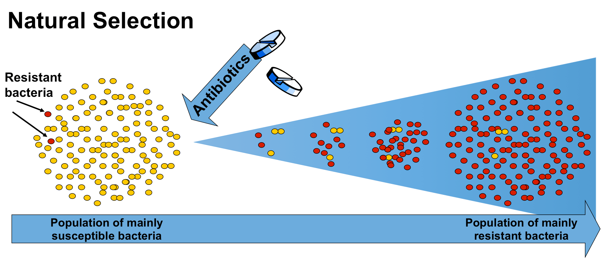Mutations And Selection Antibiotic Resistance React