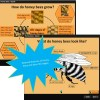 honey bee features and life stages