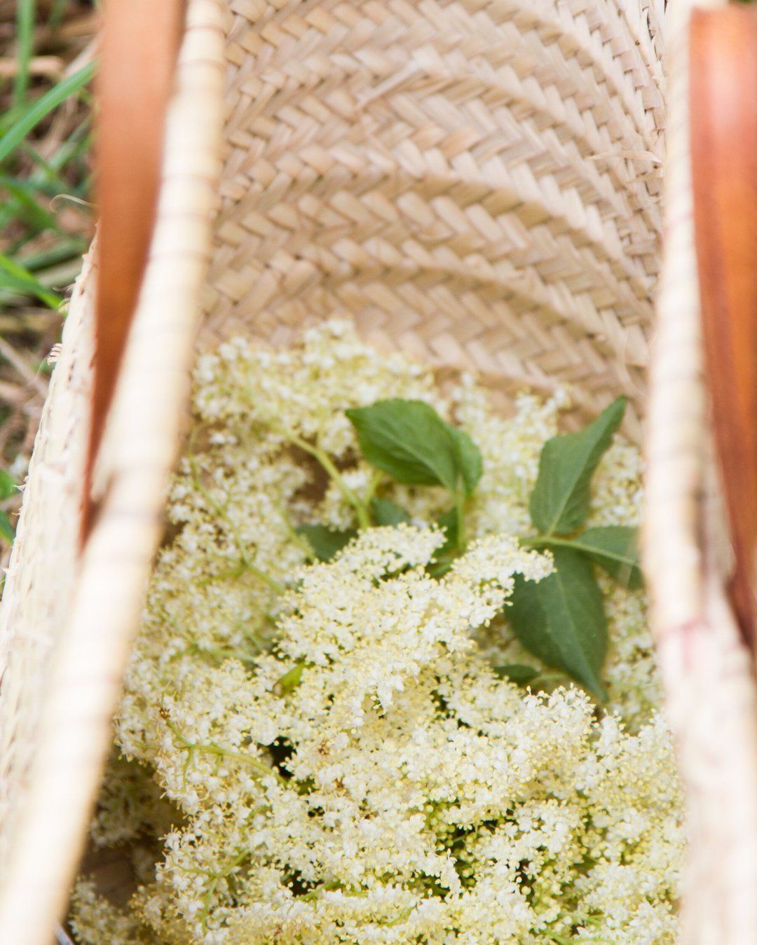 elderflower_reading_my_tea_leaves_IMG_0507