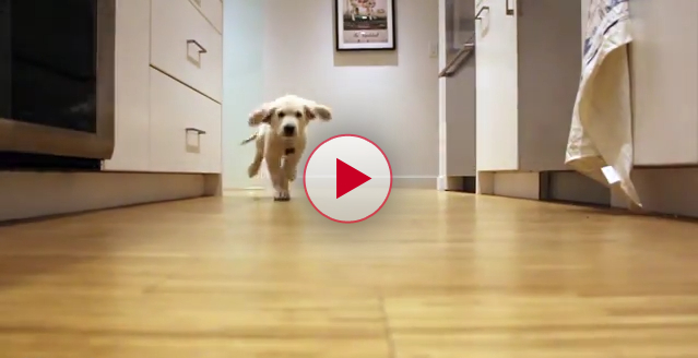 Dogs Running for Dinner Time Lapse Style Video.