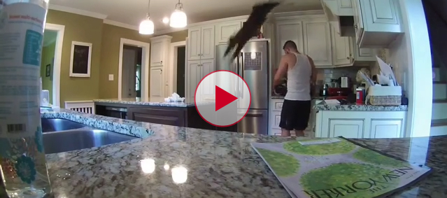 Cat frightens the life out of his owner.