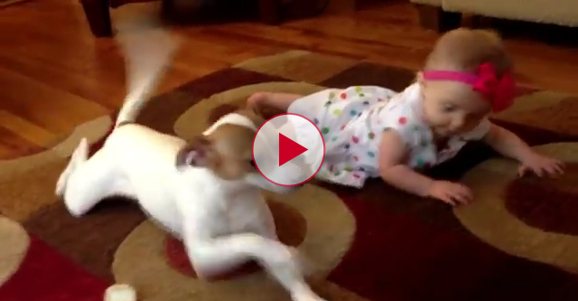 Dog teaches Baby how to crawl.