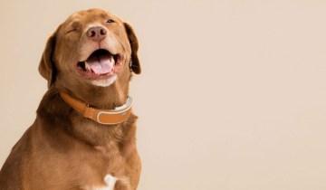 Собаки действительно понимают человеческую речь