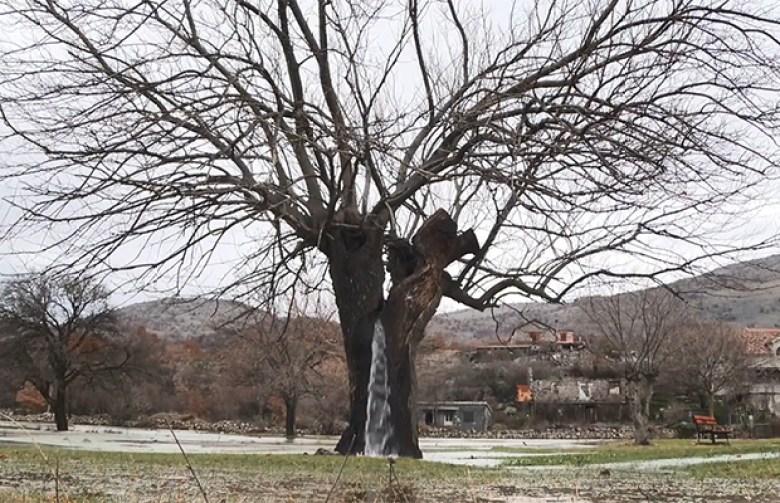 Дерево-фонтан из Черногории