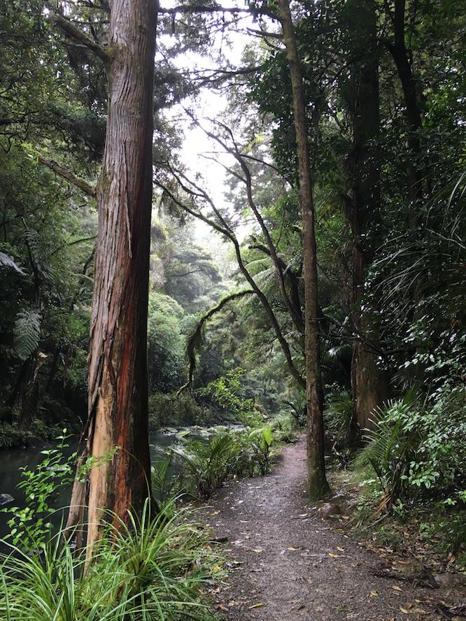 NZ Whangarei Nature Walk 1