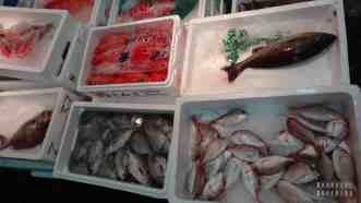 Tokio Japonia - targ rybny Tsukiji