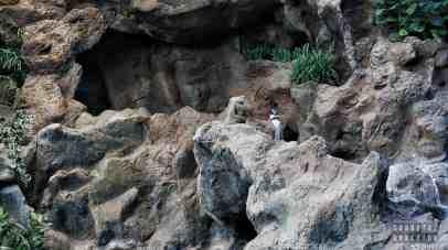 Teneryfa - Loro Park (pingwiny)